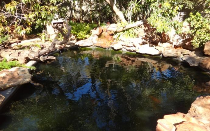 Happy koi happy koi koi keeping done right adpar for Koi ponds durban