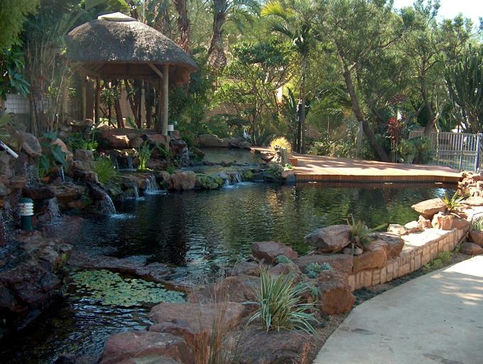 Happy Koi Happy Koi Koi Keeping Done Right Durban Koi Pond Pictures